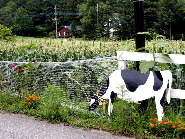 Kiyosato cow art