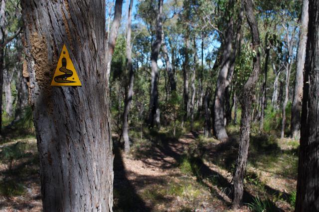 Bibbulman Track sign on tree