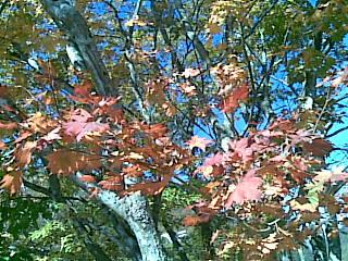 Autumn leaves at Doai