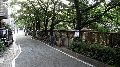Meguro-gawa, Nakameguro
